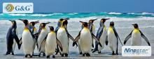 Пінгвіни ? Вони в нас є. Недорого
